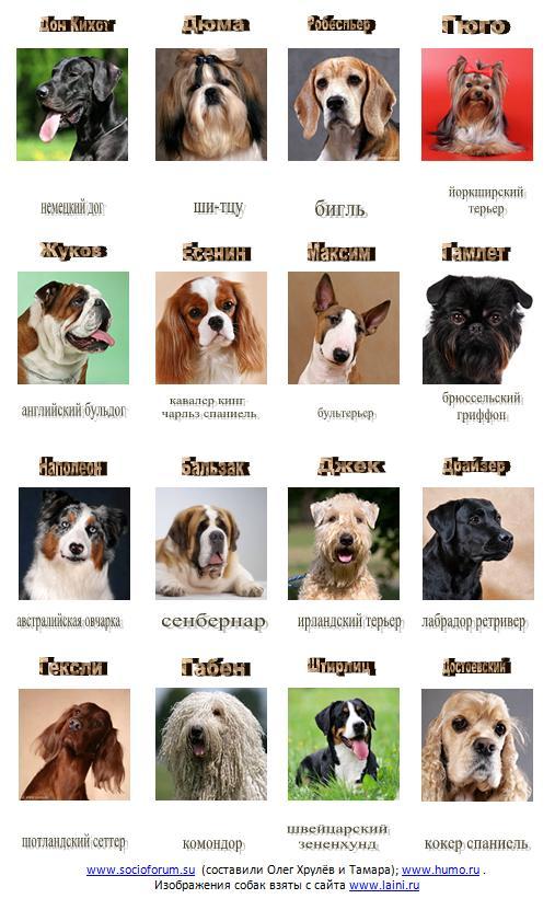 Картинки собак и их названия пород